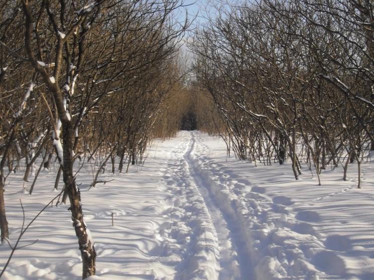 Arboretum Morgan
